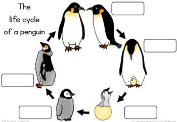 Penguin life cycle  worksheet