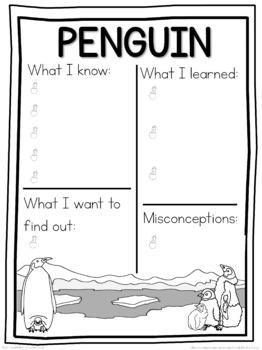 Penguin schema  worksheet
