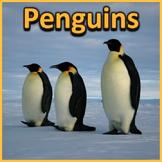 Penguins - PowerPoint & Activities
