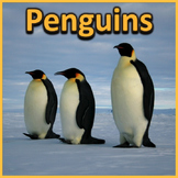 Penguins - PowerPoint & Activities