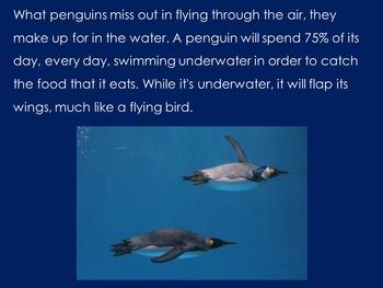 Penguins PowerPoint