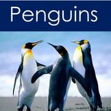 Penguins Habitat | Penguins PowerPoint | Penguins Power Point