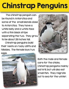 Penguins- a nonfiction unit