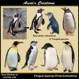 Realistic Penguins Clip Art