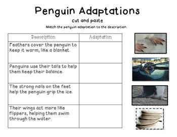 Penguins- A non-fiction minibook