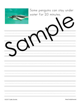 Penguins Unit - Copywork - Print - Handwriting