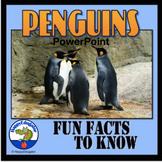 Penguins PowerPoint - Fun Facts About Penguins