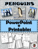 Penguins Informational PowerPoint Editable + Math and Literacy Activities