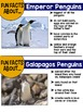 Penguins {Informational Text, Story & Poem}