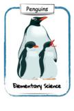Penguins: Lesson Plan & Activities