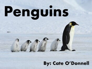 Penguins - Level D eBook for Kids