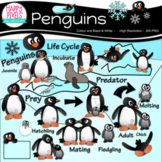 Penguins Life Cycle Clip Art for Animal Science Unit ʕ•ᴥ•ʔ