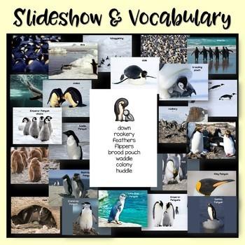Penguins Nonfiction Close Reading & Visual Vocabulary Unit