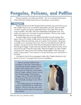 Penguins, Pelicans, and Puffins