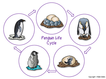 the origin and life cycle of a penguin Request pdf on researchgate | life cycle of the tick ixodes uriae in penguin colonies: relationships with host breeding activity | a survey of the temporal pattern of.