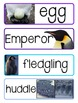 Penguins, Penguins, Penguins 8 Penguin Themed Literacy and