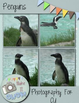 Penguins Photographs