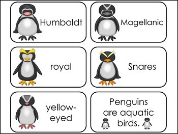 Penguins Picture Word Flash Cards.