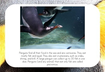 Penguins - Posters/Flash Cards