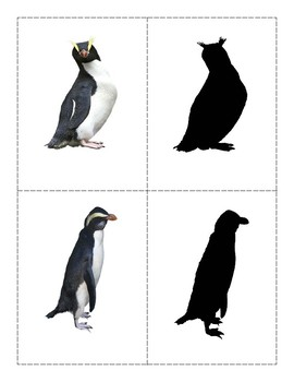 Penguins : Shadow Match-up Cards and Charts with names