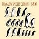 Penguins Species Black and White Line Art / Clip Art Set for Commercial Use