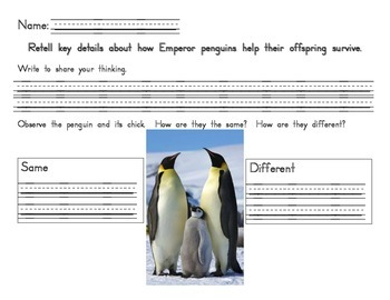 Penguins response sheet