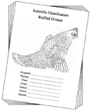 Pennsylvania State Bird Notebooking Set (Ruffed Grouse)