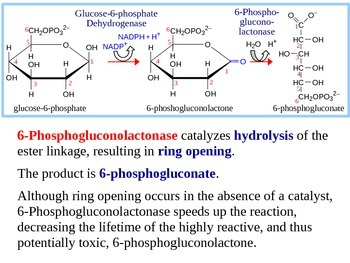 Pentose Phosphate Pathway Explained (Handout / PPT Presentation)