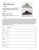 Peppered Moth Worksheets & Teaching Resources | Teachers ...