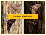 Peppered Moth Scenario