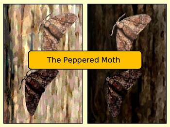 Peppered Moth Scenario