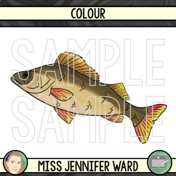 Perch Fish Clipart