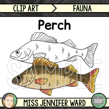 Perch Fish Clip Art