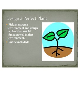 Perfect Plant Project