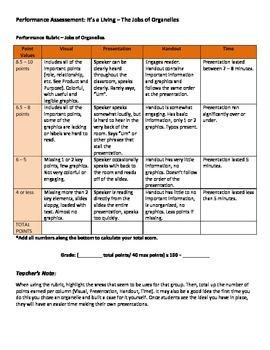 Performance Assessment - Jobs of Organelles