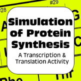 Protein Synthesis DNA Transcription & Translation: Dry Lab High School Genetics