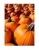 Permission Slip - Pumpkin Patch