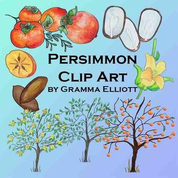 Persimmon Clip Art - Semi - Realistic Clip Art - Color and Black Line - 300 DPi