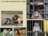 Persuasive Writing- Caged Animals