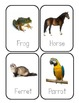 Pet Flashcards *Real Photos!*
