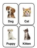 Pet Flashcards *Real Photos!*
