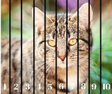 Pet Number Sequencing Puzzle 1-10