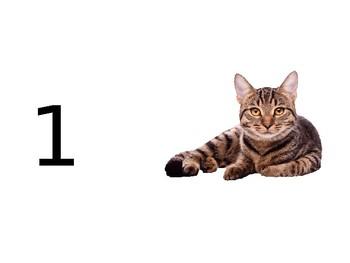 Pet Puzzles 1-10