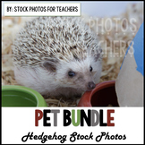 Pet Stock Photos Hedgehog
