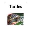 Pet Turtle Story