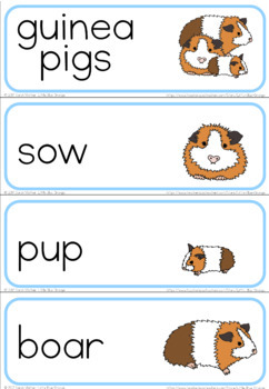 Pet families word wall