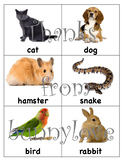 Pet sort, Pet Needs, Charts