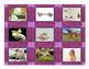 Pets & Pet Care Cards
