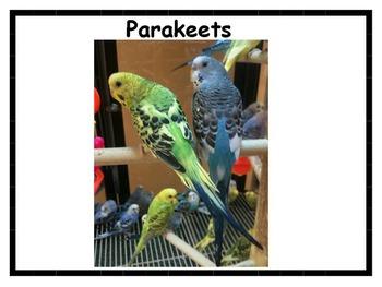 Pets Posters Bundle