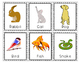 Pets Flashcards and Vocabulary Activities